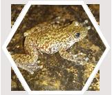 Frog, Australian Cloud Forest