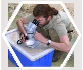 Rainforest fieldwork