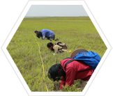 Teams conduct vegetation surveys to better understand the Whooping Crane habitat.