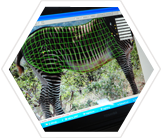 Stripe recognition software used to identify individual zebras