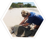 Conservation volunteer with leatherback turtle, Costa Rica