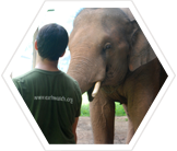 Earthwatch volunteer with captive elephant