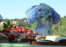 Local agricultural produce, California, USA