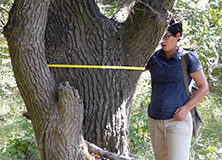 Research volunteer measuring the diameter and height of trees in a riverside study plot