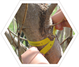 Recording tree measurements to estimate biomass