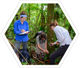 Earthwatch team records data on plant populations