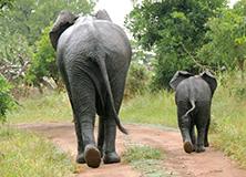 elephants-donate-charity-earthwatch