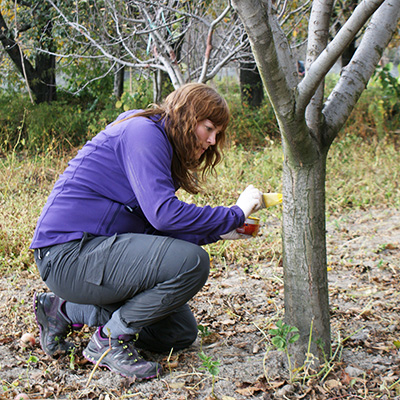 research-trees-earthwatch