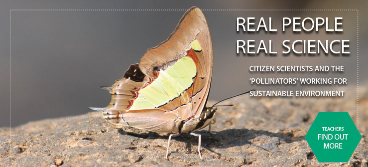 Project on Pollinators, Bees and Butterflies at Kullu (Himachal Pradesh) and Almora (Utt arakhand)