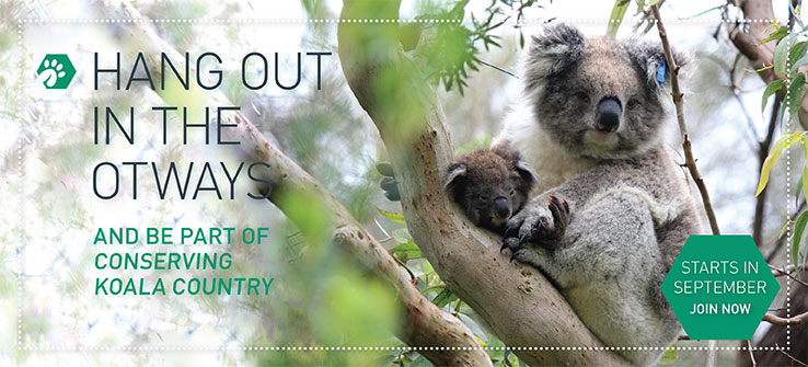 conserving koala country.