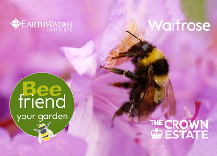 bee-friend-your-garden-research-earthwatch
