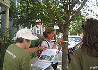 trees-research-boston-earthwatch