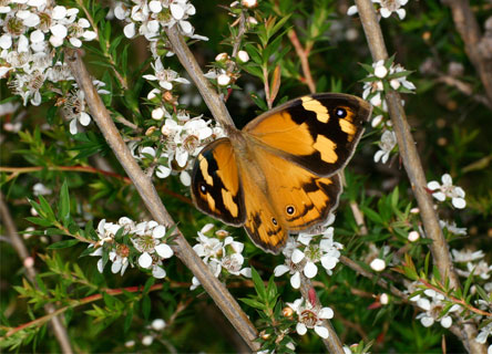 butterfly-climate-change-earthwatch