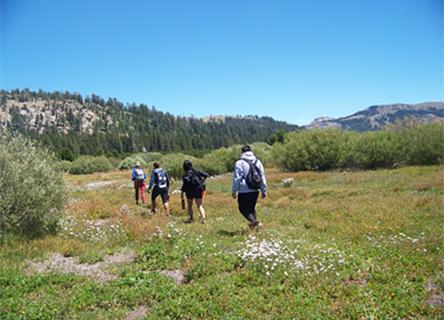 Montane Meadows