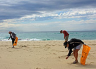 teachwild-australia-research-beach