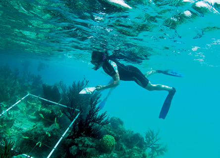 snorkel-research-earthwatch-science-ocean