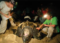 Earthwatch volunteers are helping to save Leatherback Turtle in the Atlantic and Pacific Oceans.