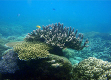 Corals on the Great Barrier Reef