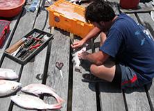 Preparing bait