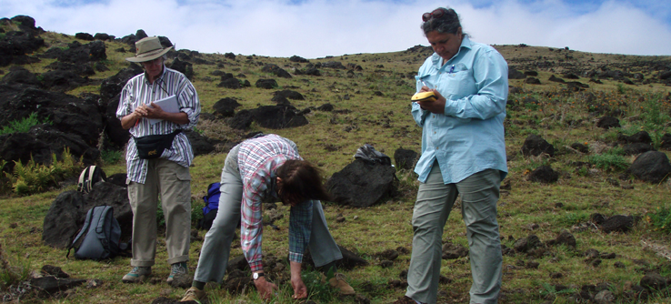 Earthwatch volunteers conducting a field survey on Easter Island