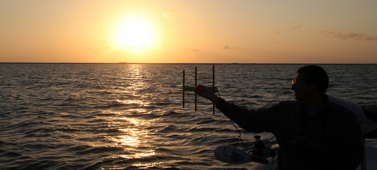 Tracking common loons in the Gulf of Mexico