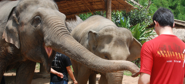 Elephant research project, Thailand