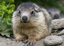 Of Mountains and Marmots: Climate Change in the French Alps