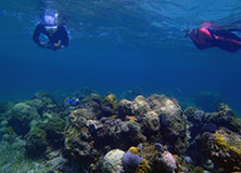 Snorkeling to Protect Reefs in The Bahamas
