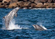 Whales and Dolphins Under the California Sun - Weekender