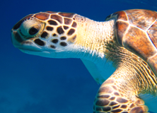Tracking Sea Turtles in The Bahamas