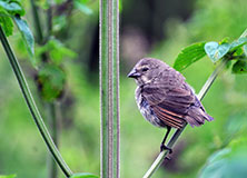 Following Darwin's Finches in the Galapagos