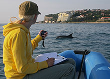 Tailing Dolphins in the Adriatic Sea