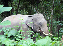 Conserving Tiger and Elephant Habitat in India