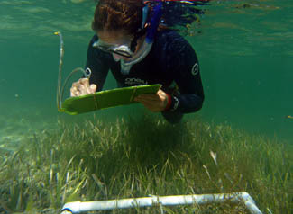 Sailing for Seagrass - Student Challenge