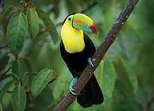 Toucans, Parrots, and Other Wildlife in Costa Rica's Forests
