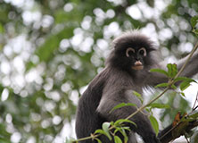 Climate Change and Thailand's Biodiversity Hotspots
