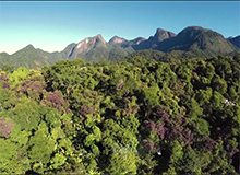 Wildlife and Reforestation in Brazil