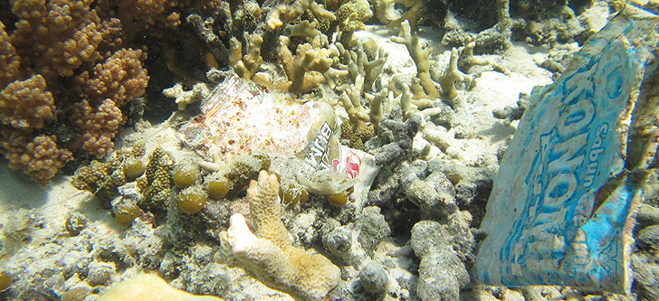Coral and other marine life affected by plastic debris