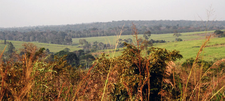 Budongo Forest from afar
