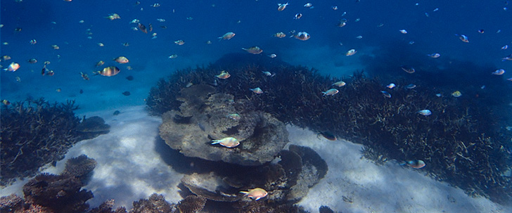 Fish enjoying the shallow coral reef