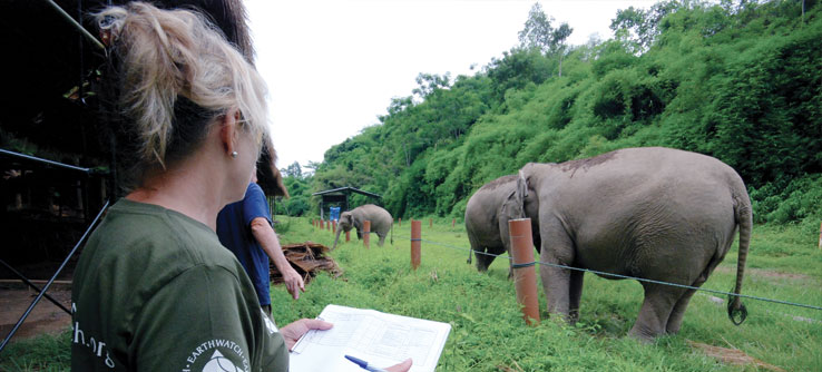A volunteer observes elephant behavior.