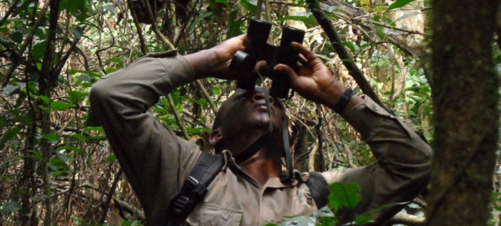 A researcher keeps his eyes trained on a high-up chimp in Uganda