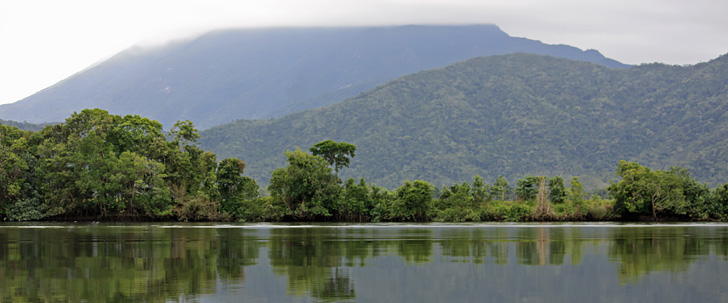 Experience a unique tropical estuary. The Daintree River.