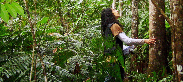 Scientist Thrity Vakil surveys trees in a mahogany plantation.