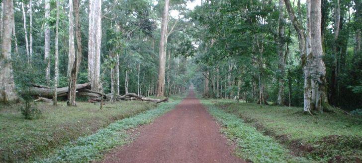 The Royal Mile in the Budongo Forest Reserve bird-watching spot.