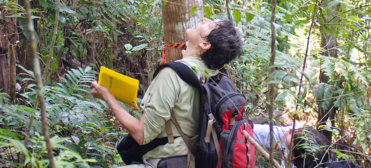 Earthwatch volunteer estimates forest canopy cover in Puerto Rico
