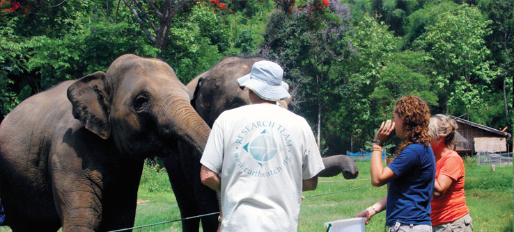 Volunteers work with elephants.