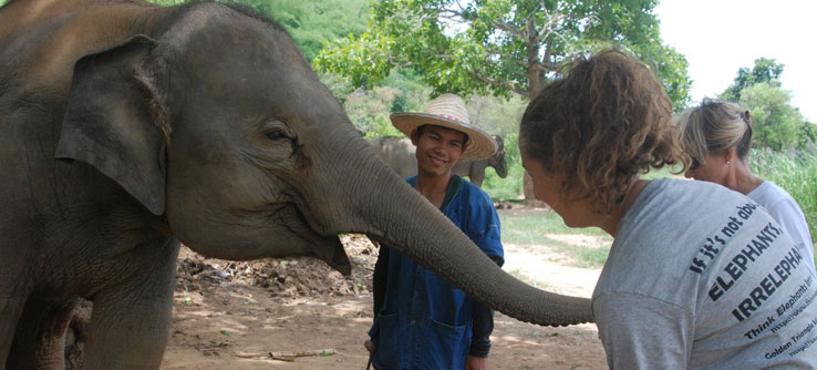 A mahout (caretaker) discusses his work.