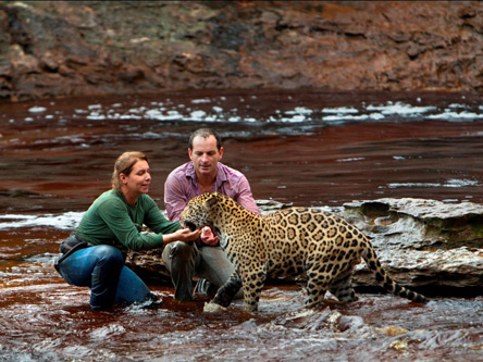 Caring for a jaguar through the Jaguar Conservation Fund.