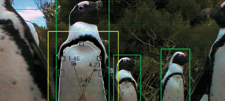 Penguin detection and recognition technology